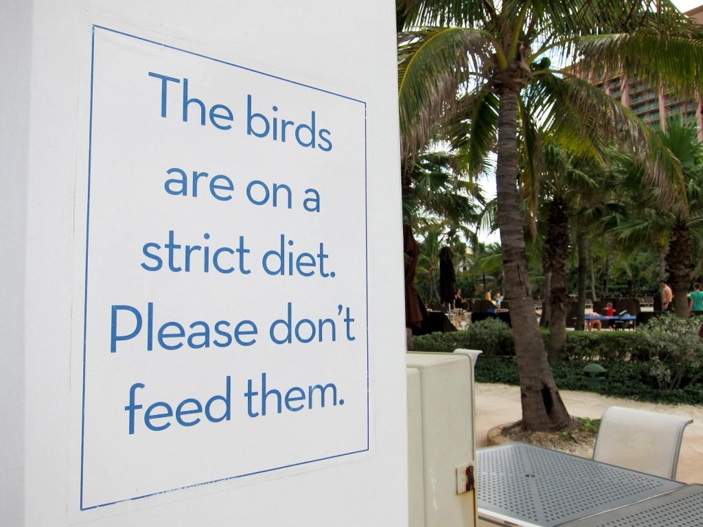 don't feed birds