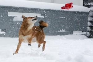snowed-24b